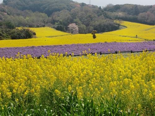 淡路島 花さじきの風景